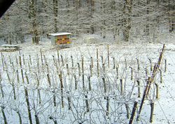Slovenia for Families - Vino Cottage